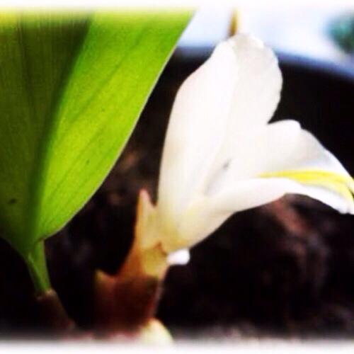 Paya Wan Dork Tong golden flower